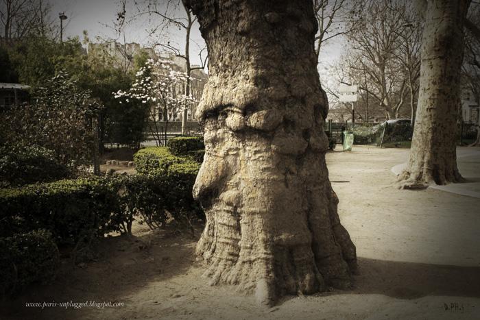 arbre_DePHS