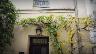 Paris 11 – La Cour Damoye