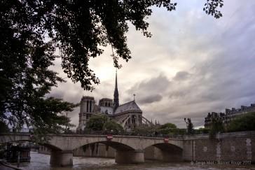 Paris 04 – Notre Dame et la Rose