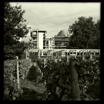 Sur les pentes de Bercy